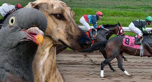 Horse Racing in - 168633