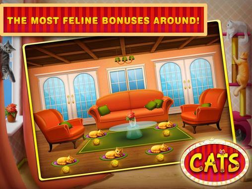 Cat in - 807582