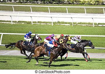Horse Racing in - 917925